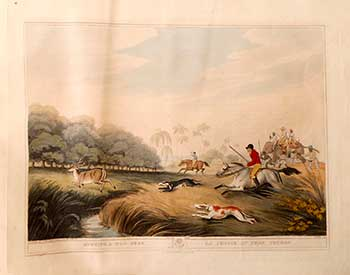 Running [Hunting] a Hog-Deer [on horses and elephant]. Plate 39 from the Second Elephant Folio edition of ORIENTAL FIELD SPORTS : being a complete, detailed, and accurate description of the WILD SPORTS OF THE EAST. Samuel Howett, Thomas Williamson, Artist -, Author -.