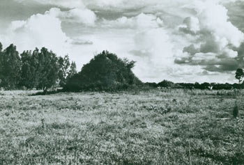 Black and White Photograph, meadow in front of fence line. 20th Century American Photographer.