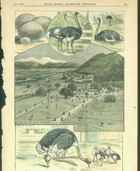 California--The Kenilworth Ostrich Farm, Near Los Angeles. Frank Leslie's Illustrated Newspaper.