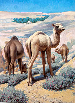 A Group of Camels. Edward Osmond
