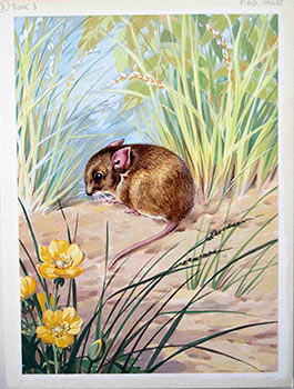 A Field Mouse. George Brook