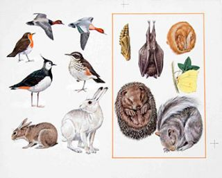13 Studies of Birds and Mammals. Denys Ovenden, F. Z. S., D W