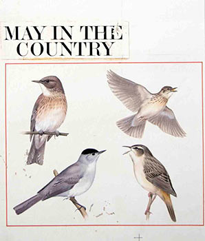4 Studies of Birds: May in the Country. Denys Ovenden, F. Z. S., D W