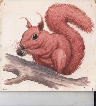 A Squirrel. Peter Henville