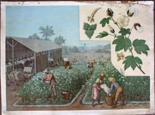 Baumwolle [19th Century View of Blacks picking and cleaning cotton]. Goering-Schmidt