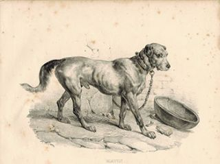 Matin. (Large Dog, chained). Victor Adam