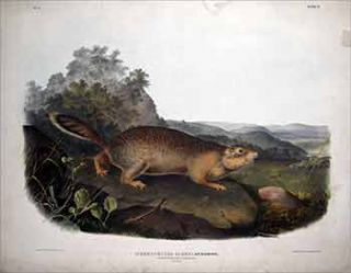Parry's Marmot Squirrel - Plate 9 (IX)from The Viviparous Quadrupeds of North America. First...
