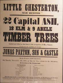 22 Capital Ash, 18 Elm & 9 Abele Timber Trees. Little Chesterton near Bicester [original auction...