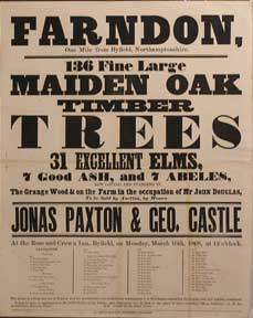 136 Fine Large Maiden Oak Timber Trees, 31 Excellent Elms, 7 Good Ash, and 7 Abeles. Farndon, one...
