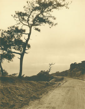 Black and White Photograph, tree lined path heading to coastline (Northern California?). 20th...