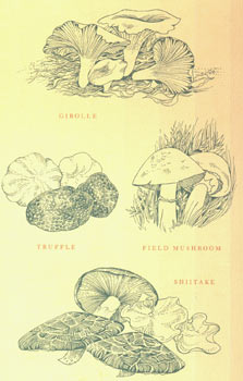Dust Jacket for The Mushroom Feast. Price clipped. Jane Grigson, Cynthia Krupat, jacket design.