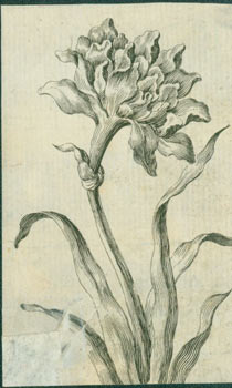 Flowers. 18th Century British Engraver