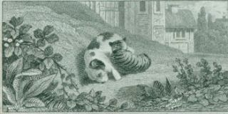 Cat & Dog Cuddling On Lawn. 19th Century British Engraver?